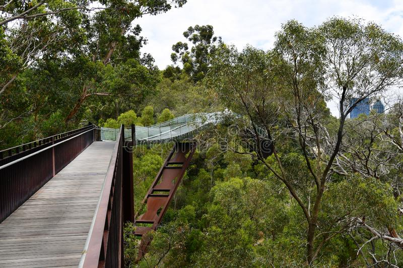Australia, WA, Perth, Kings Park. Australia, Perth, tree top walk with glass bridge in public Kings Park, a preferred tourist attraction in the capital of royalty free stock photography