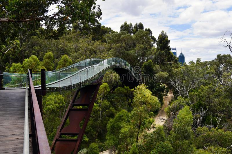 Australia, WA, Perth, Kings Park. Australia, Perth, tree top walk with glass bridge in public Kings Park, a preferred tourist attraction in the capital of royalty free stock photo