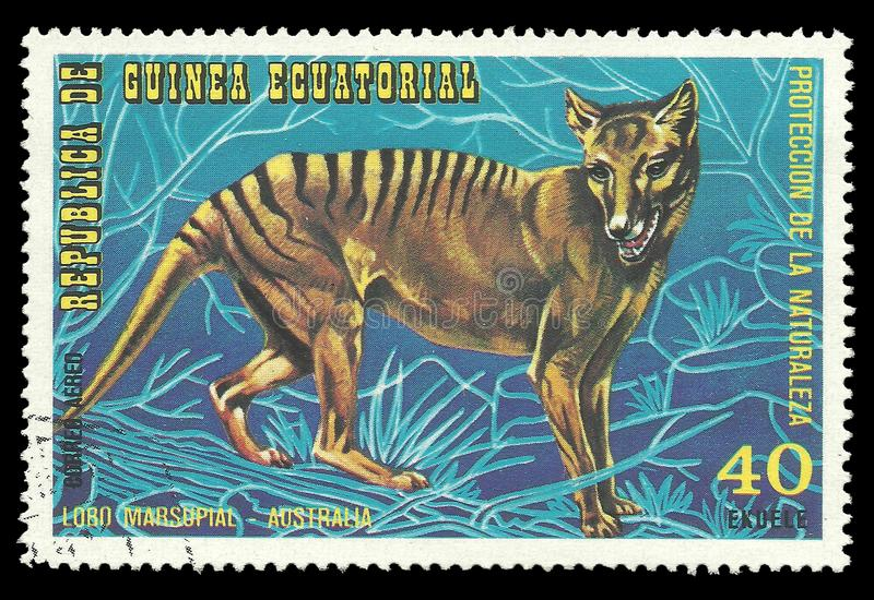 Australian Animals, Tasmanian Tiger royalty free stock image