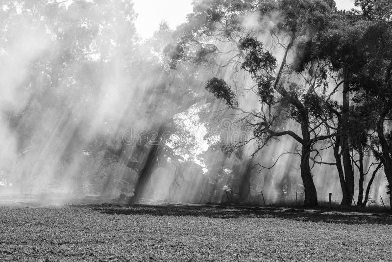 Australian bushfire royalty free stock photography