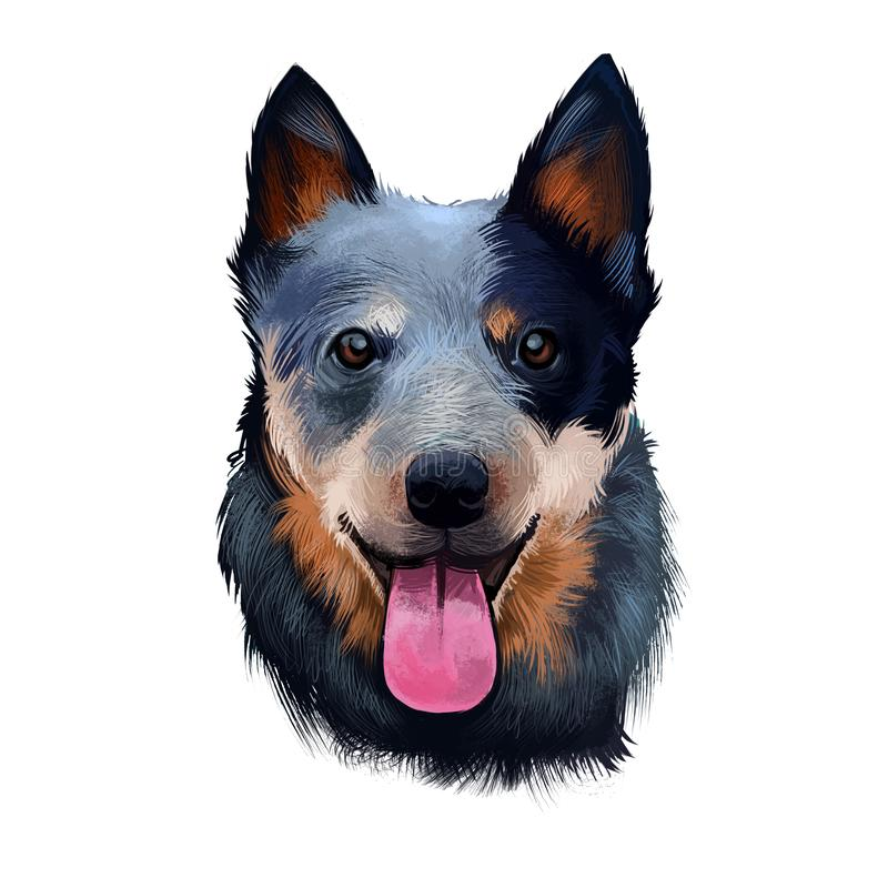 Australian Cattle Dog digital art illustration isolated on white. Cattle Dog breed of herding dog originally developed in vector illustration