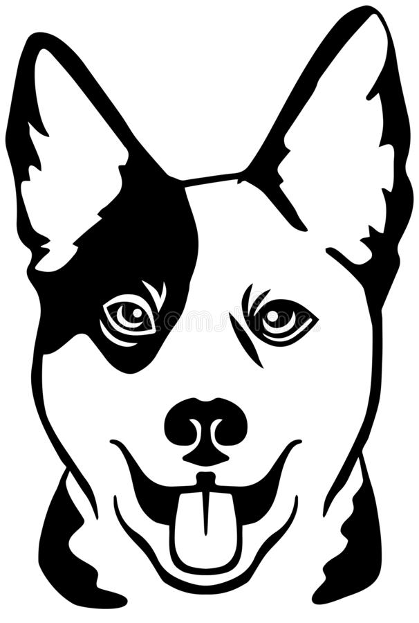 Free Australian Cattle Dog Head Black And White Royalty Free Stock Images - 149525749
