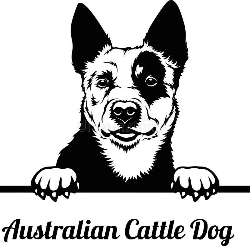 Free Australian Cattle Dog - Peeking Dogs - Breed Face Head Isolated On White Royalty Free Stock Photo - 192759275
