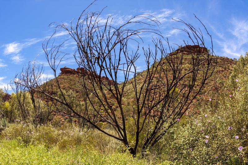 Australian desert, Kings Canyon, Northern Territory,Watarrka National Park, Australia royalty free stock photo