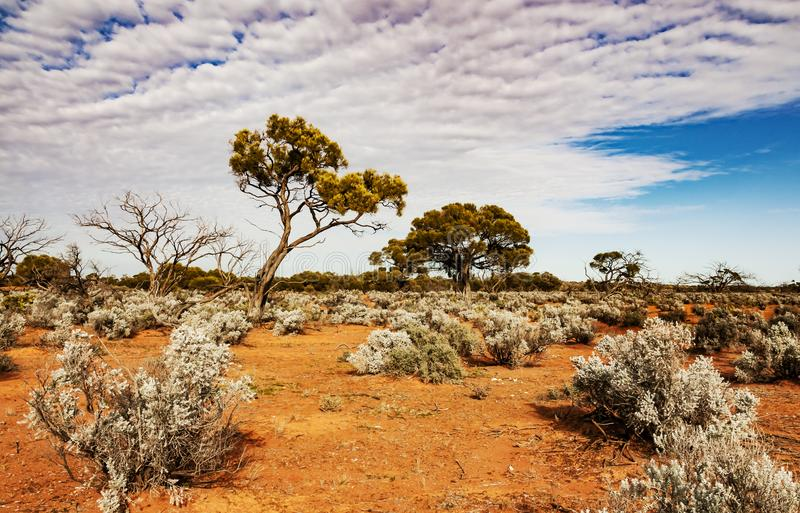 The Australian desert, the outback. The red center in the australian desert, the outback in Northern Territory royalty free stock photo