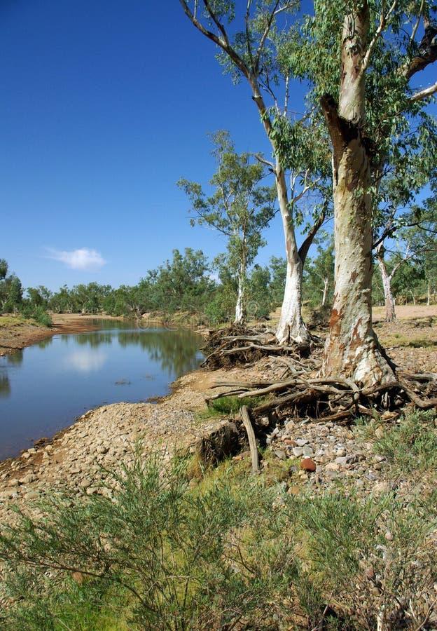 Free Australian Eucalyptus Royalty Free Stock Image - 11809186