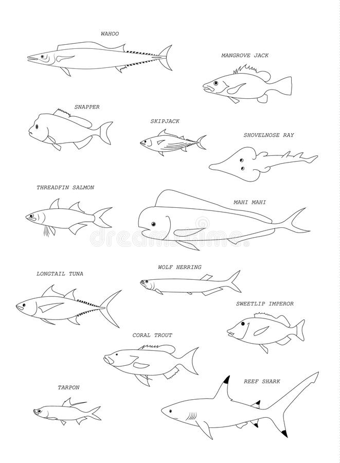 Australian fish. Vector outline. Australian fish in river, estuary and sea water. Fish names. Vector outline royalty free illustration