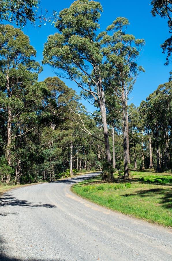 Australian forest gravel road near Warburton, Victoria stock images