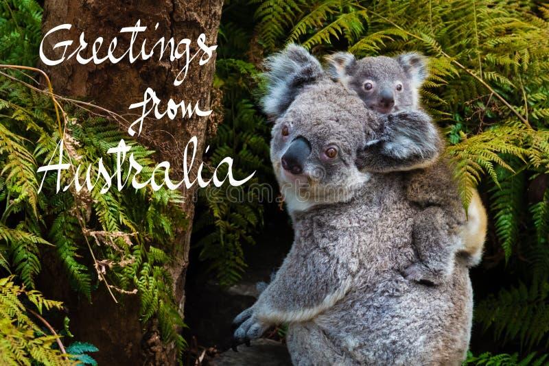 Australian koala bear native animal with baby and greetings from download australian koala bear native animal with baby and greetings from australia text stock illustration m4hsunfo