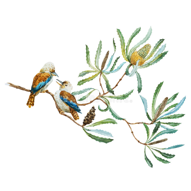 Australian kookaburra bird stock illustration