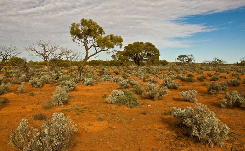 Download The australian landscape stock image. Image of australia - 16574947