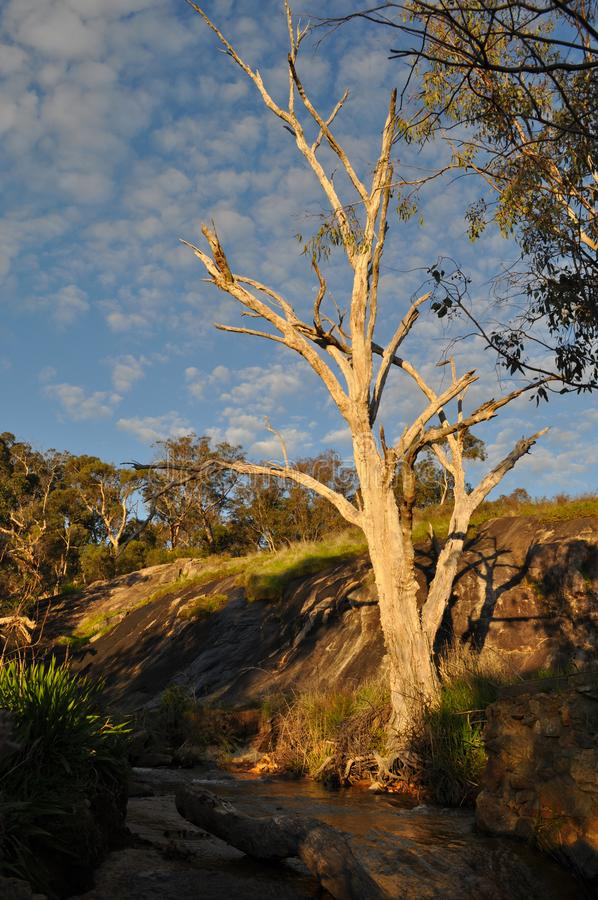 Australian landscape with creek and eucalyptus trees, early evening light. Beautiful landscape with fresh water creek and tree skeleton, early evening sunlight stock photo
