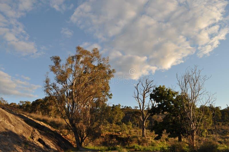 Australian landscape eucalyptus trees, early evening light. Beautiful landscape, early evening sunlight, Whistlepipe Gully Walk, Mundy Regional Park, Kalamunda stock images