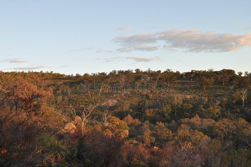 Australian landscape eucalyptus trees, early evening light. Beautiful landscape, early evening sunlight, Whistlepipe Gully Walk, Mundy Regional Park, Kalamunda royalty free stock photo