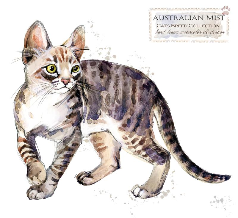 Australian mist cat. watercolor home pet illustration. Cats breeds series. stock illustration
