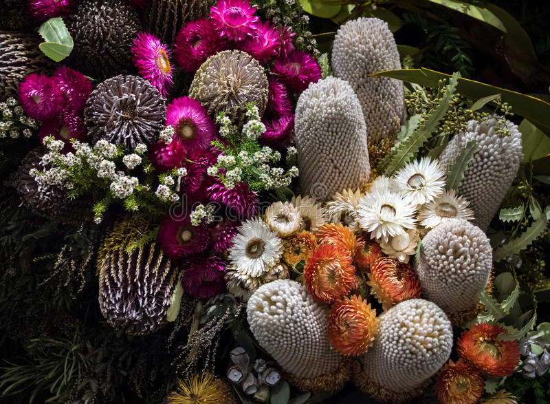Australian native banksia and daisy wild flowers. Arrangement of Australian native plants including banksia and paper daisies stock images