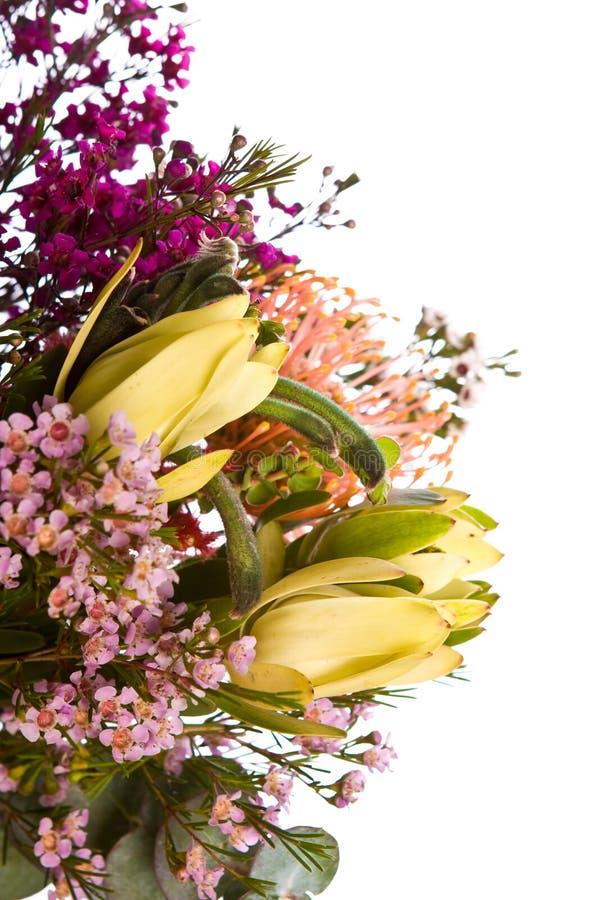 Free Australian Native Flower Bouquet Royalty Free Stock Photo - 6728445