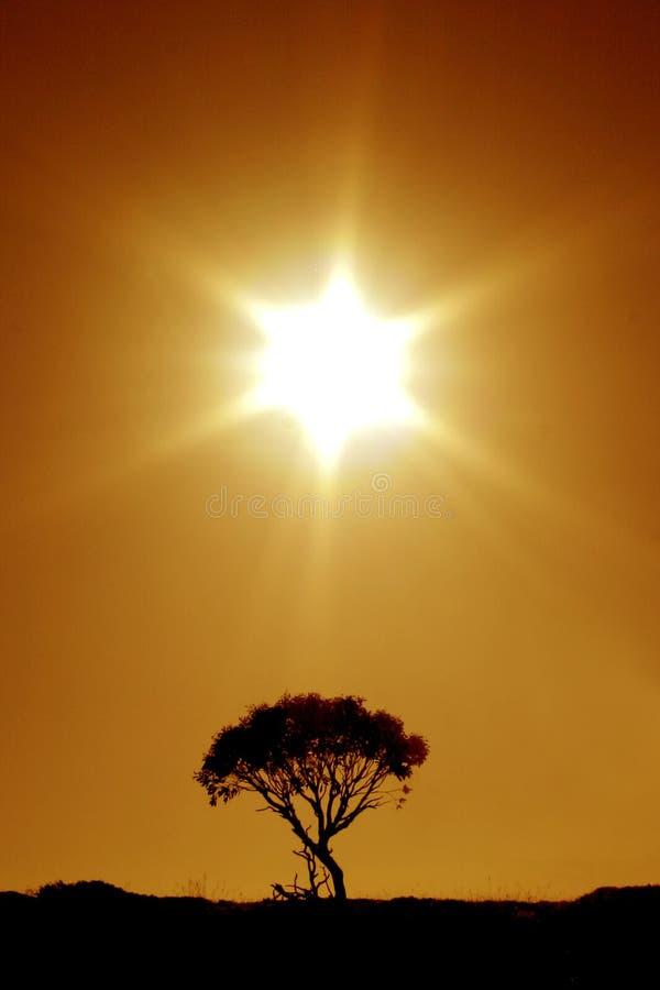 Australian Outback: The Last Tree. This photograph was shot at Mt. Bufallo, Victoria - Australia royalty free stock photo