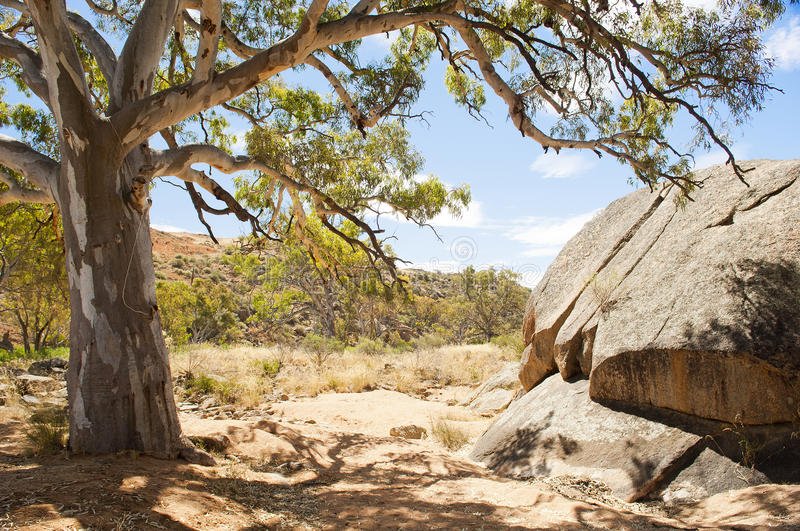 Australian Outback Oasis. Classic Australian outback bush scenic with huge gum tree's in a dry river bed royalty free stock images