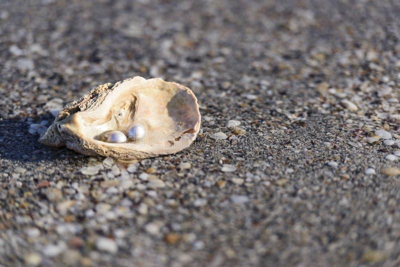 Australian pearls stock photos