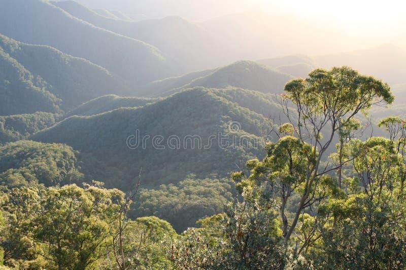 Australian Rainforest Dawn. Rainforest mountain ridges at dawn, New South Wales, Australia