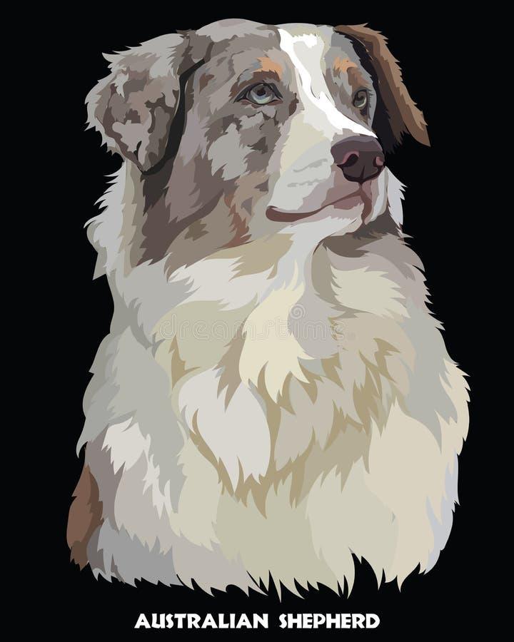 Australian shepherd colorful vector portrait royalty free illustration