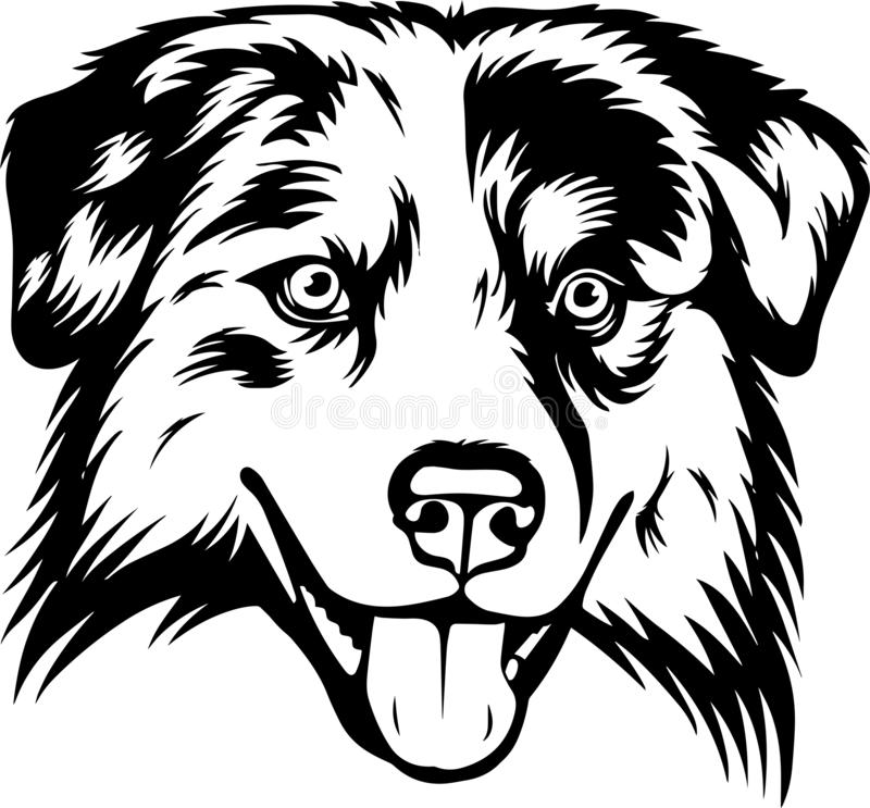 Australian Shepherd Dog Breed Isolated Pedigree Pet Puppy Head. Face head domestic canine purebred, portrait vector illustration