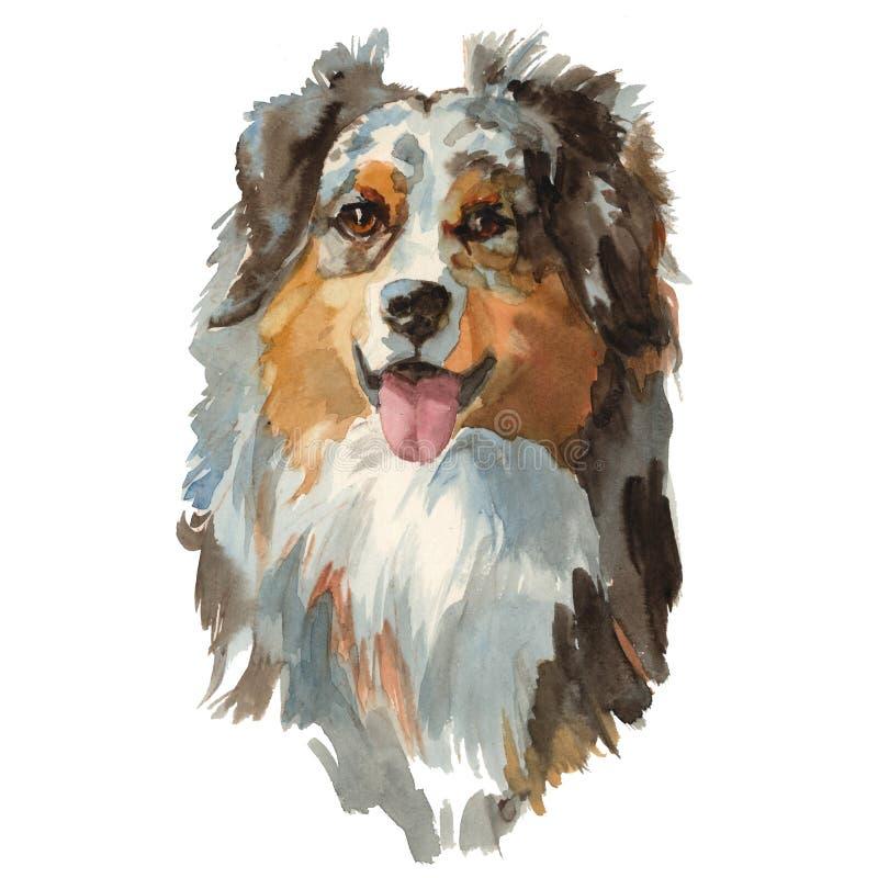 Australian shepherd dog portrait royalty free illustration