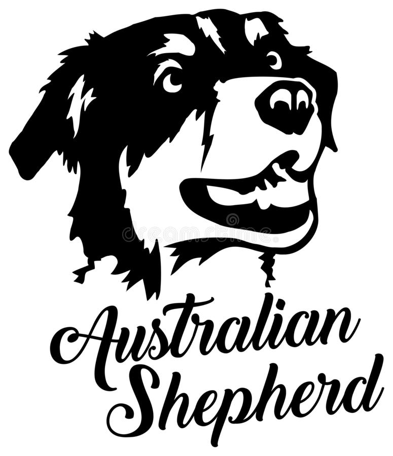 Australian Shepherd head royalty free illustration