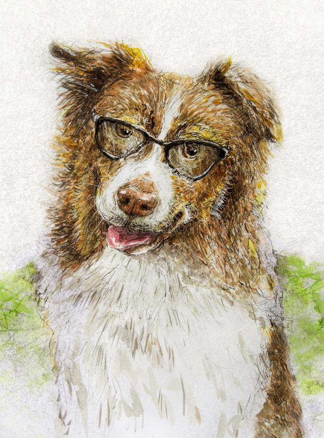 Australian shepherd wearing glasses in ink and watercolor royalty free stock photos