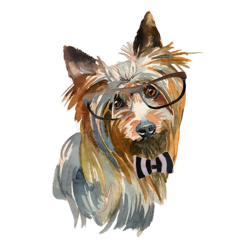Australian silky terrier - hand painted, isolated on white background watercolor hipster dog portrait vector illustration