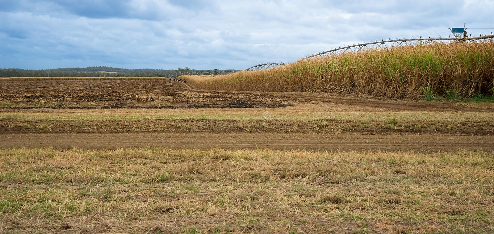 Australian Sugarcane Farm Landscape. With harvested field and a field of sugar cane growing ready for harvest in winter royalty free stock image