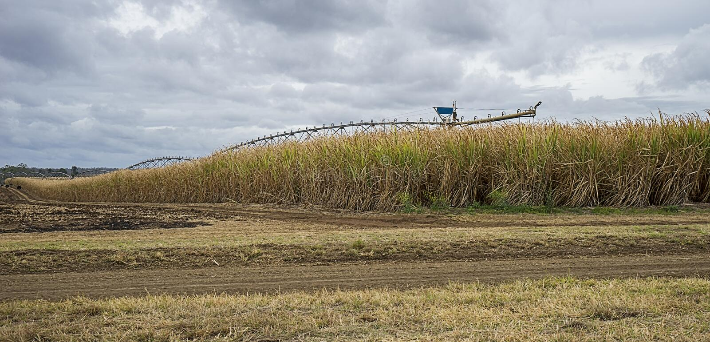 Australian Sugarcane Plantation. Ready for farmers to harvest to produce sugar and bio fuel stock photo