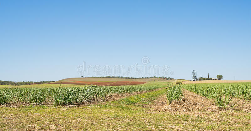 Australian Sugarcane Plantation in Spring. After winter harvest with new cane growing and some ploughed paddocks royalty free stock photography