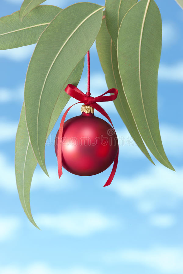 Australian Aussie Summer Christmas Tree. An Australian Eucalyptus tree or Gum tree with a red Christmas ornament hanging from it