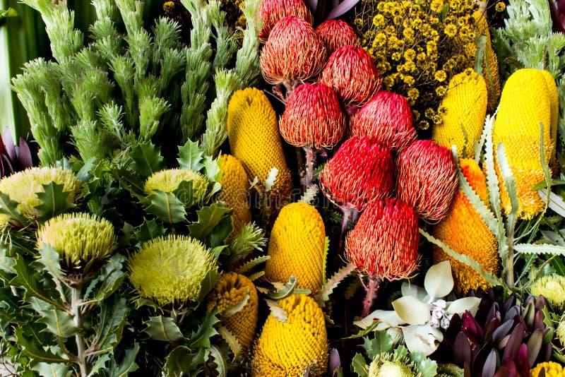 Australian wildflowers banksia, waratah, daisy stock image