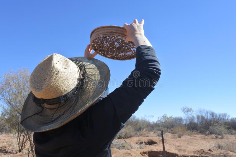 Australian woman searching gem stones in Australia outback. Australian woman fossicking searching  gem stones in the outback of the Northern Territory, Australia royalty free stock photos