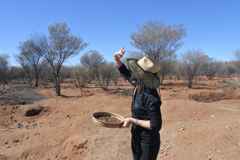 Australian woman searching gem stones in Australia outback. Australian woman fossicking searching  gem stones in the outback of the Northern Territory, Australia royalty free stock photo