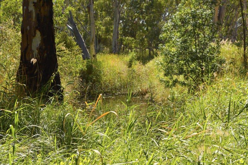 Australiano enorme Billabong imagen de archivo libre de regalías
