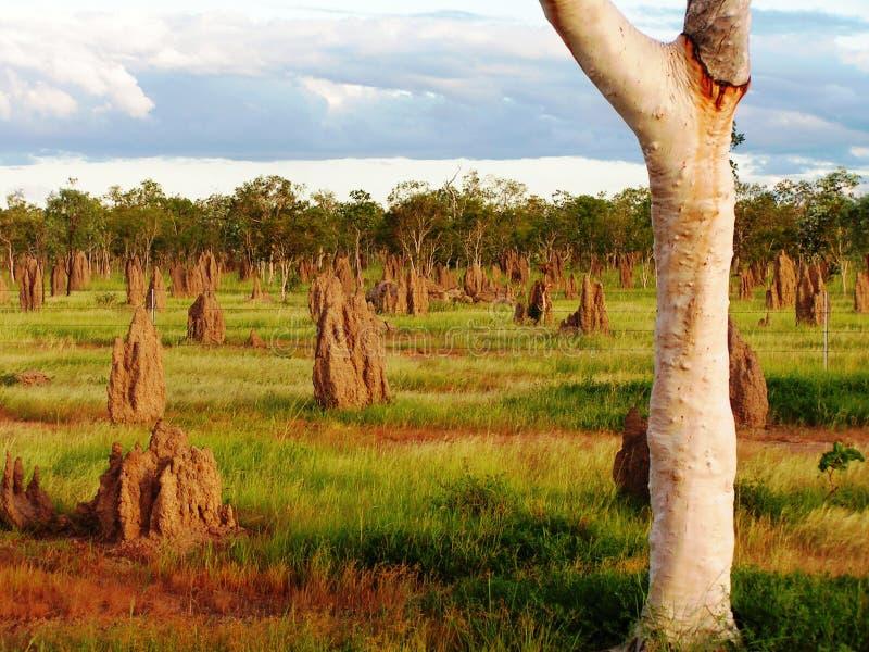 Australiano Outback immagine stock libera da diritti