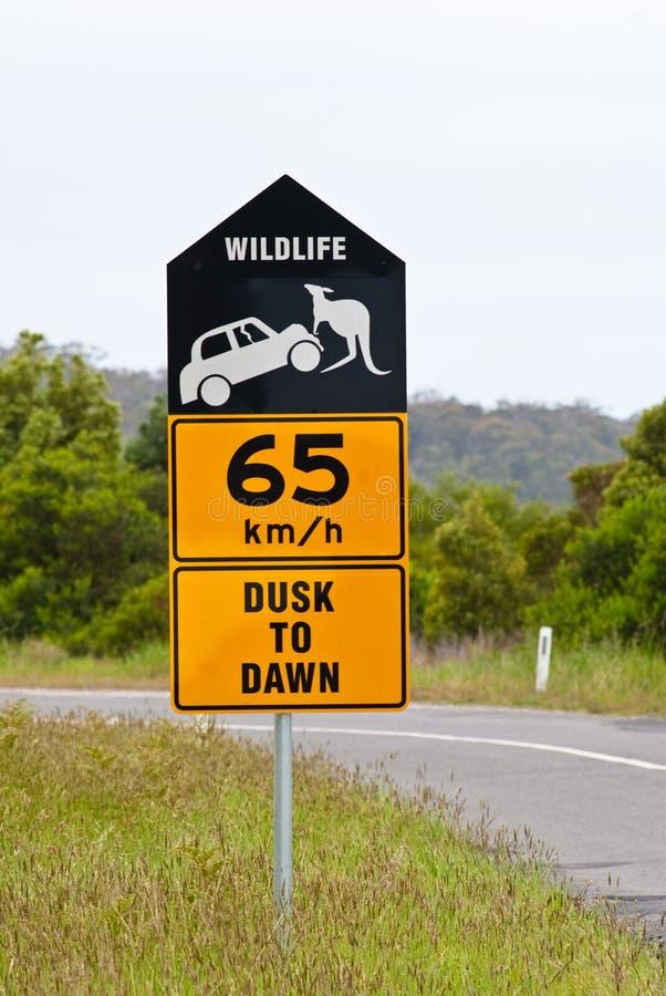 Australiano preste atenção para fora para o sinal de estrada dos animais selvagens imagem de stock
