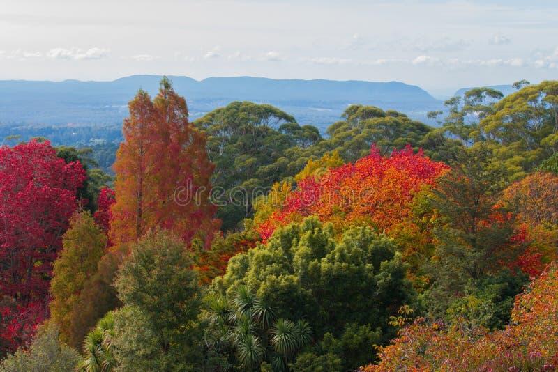 Australie bleue de montagnes de Mt Tomah images stock