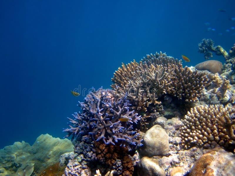 Australie de la Grande barrière de corail. images libres de droits