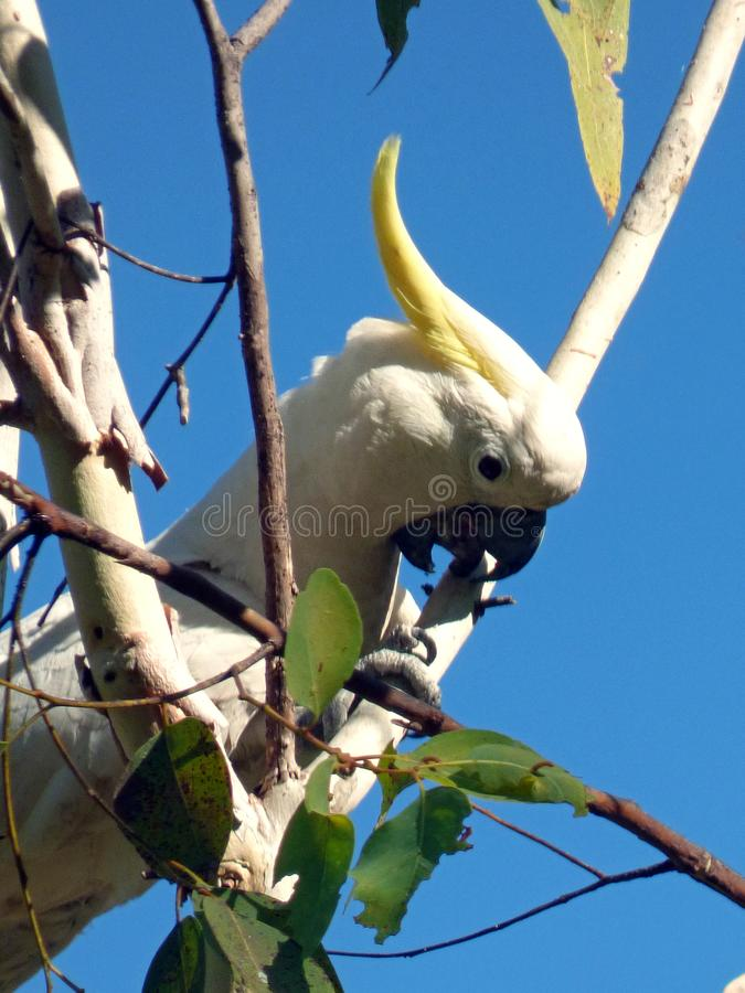 Australie, parc national de kakadu image stock