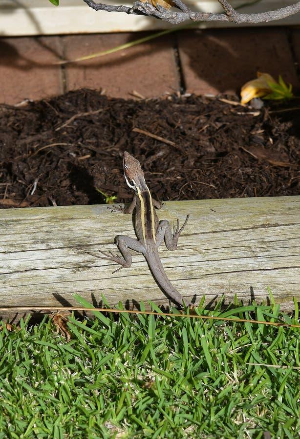 Australie, WA, zoologie image libre de droits