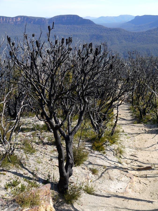 Australien: Blaue Berge nach bushfire stockfotos