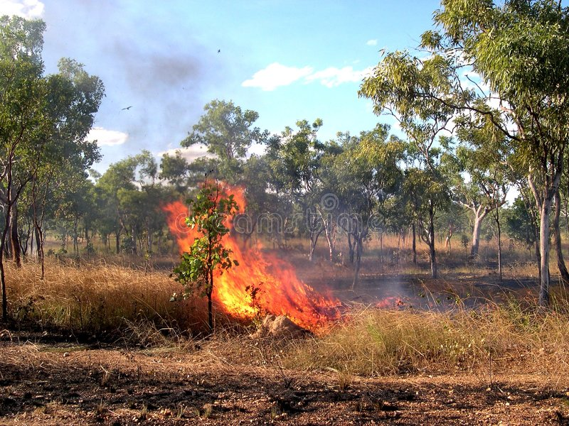 Australien burnoff royaltyfri foto