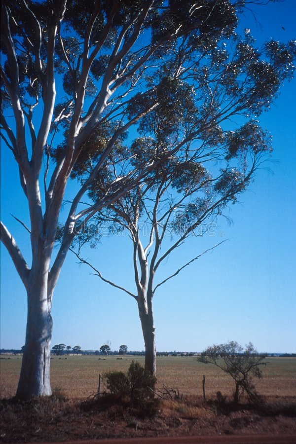 Australien bushland stock illustrationer