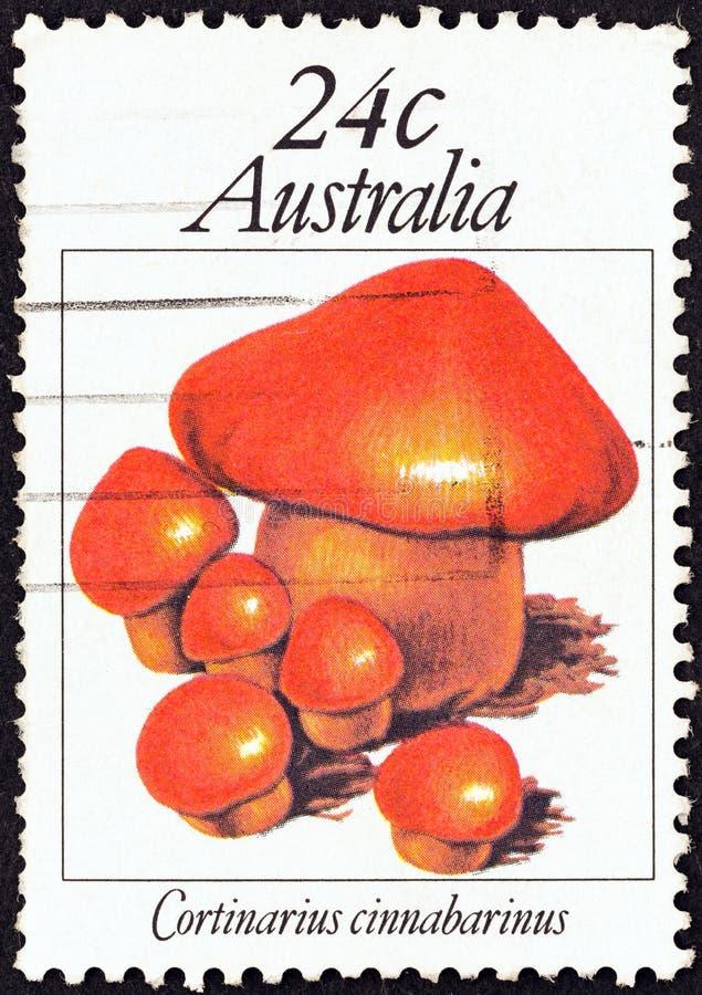 AUSTRALIEN - CIRCA 1981: Ein Stempel, der in Australien gedruckt wird, zeigt Cortinarius cinnabarinus, circa 1981 stockbild