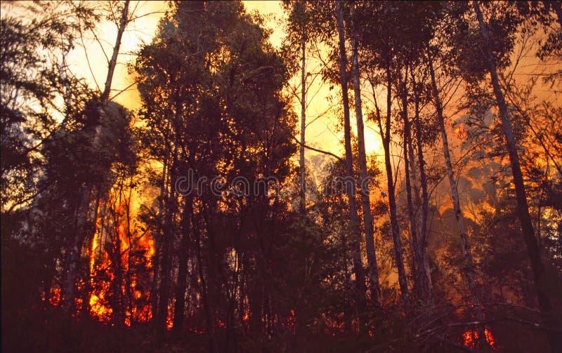 Australien: En buskebrand i Queensland royaltyfri foto